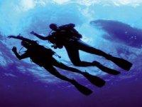 Des emotions fortes sous l eau