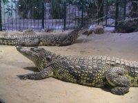 Parc Animalier Bas Rhin