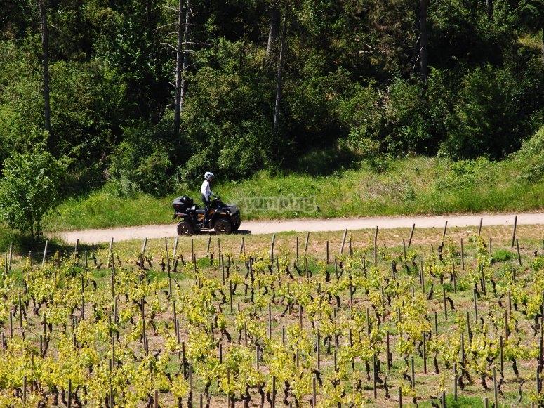 quad entre les vignes
