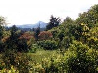 Forêt Mediterranéenne