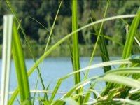 Pêche sur le lac d'Ayron