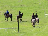 Cours et stages equestres