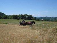 Balade equestre en attelage