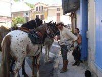 Etape de la randonnee equestre
