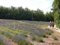 Randonnees equestres en Provence