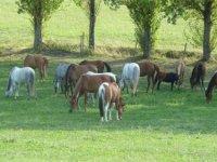 activites equestres dans le tarn