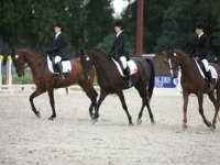 Equitation au Haras des Bussieres