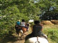 Promenades et cours equestres