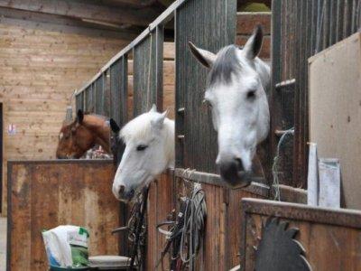 Brette Equitation