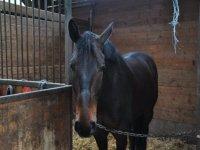 Centre equestre dans le 72