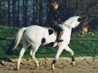 Competitions et stages d equitatioin dans le 27