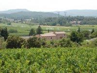 Les vignes et vergers