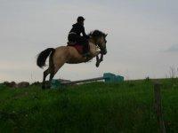 Cours et stages d equitation dans le 91