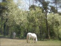 Pour des chevaux et des cavaliers heureux