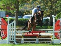 Competition equestre sur Caen