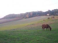 cadre du centre equestre