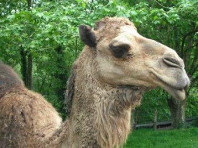 Etxola Parc Animalier Parcs Zoologiques