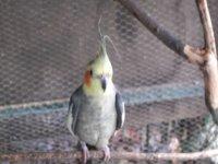 les oiseaux du parc animalier