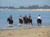 Randonnee equestre Ile de Re