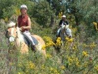 Randonnee Equestre dans l Esterel