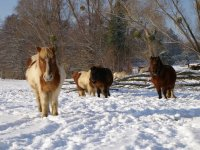 Ecole d equitation dans les Pyrenees Atlantiques
