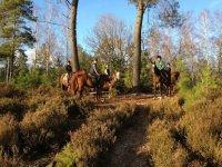 Randonnee a cheval dans les Yvelines