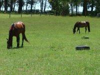 Equitation les Breviaires