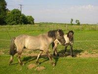 Chevaux du centre Aventure cheval