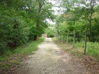 Sentiers boises du parc