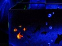 Jouer au laser game en basse normandie