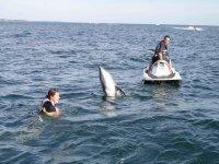 visite d'un dauphin sur la base Jet Explorer au Sables d'Olonne