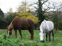 Pension pour les chevaux en Normandie