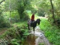 Randonnee equestre dans le Morbihan
