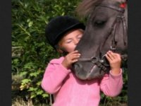 Respect du cheval et du cavalier