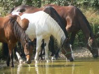 Cours d equitation et randonnees