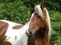 randonnee equestre dans la Vienne
