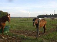 Cours et randonnees equestres dans la Vienne