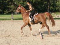 Equitation en Haute Saone