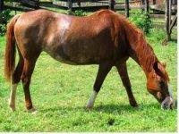 Vente de chevaux a Peltre