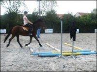 Reprise chevaux et poneys