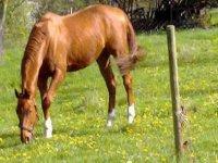 Vente de poneys et chevaux