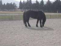 Apprentissage soin des chevaux