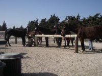 Balades et randonnees equestre a Chateauneuf les Martigues