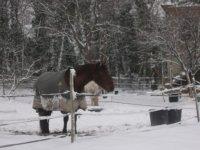 Fun Horse sous la neige