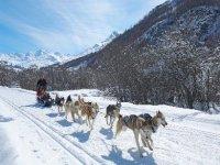 Conduite d Attelage en Savoie