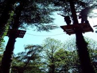 Voyagez d'arbre en arbre