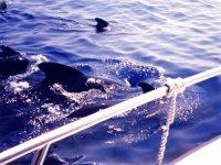 Naviguez avec les dauphins