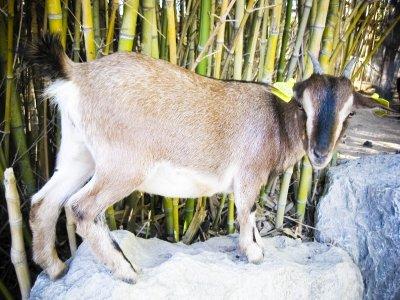 Le Petit Paradis de Vendargues Parcs Zoologiques