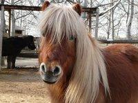 Manege des poneys