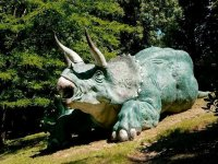 Triceratops Couche